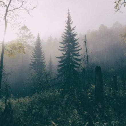 Шёпот леса. Стихотворение Валерии Светлаковой